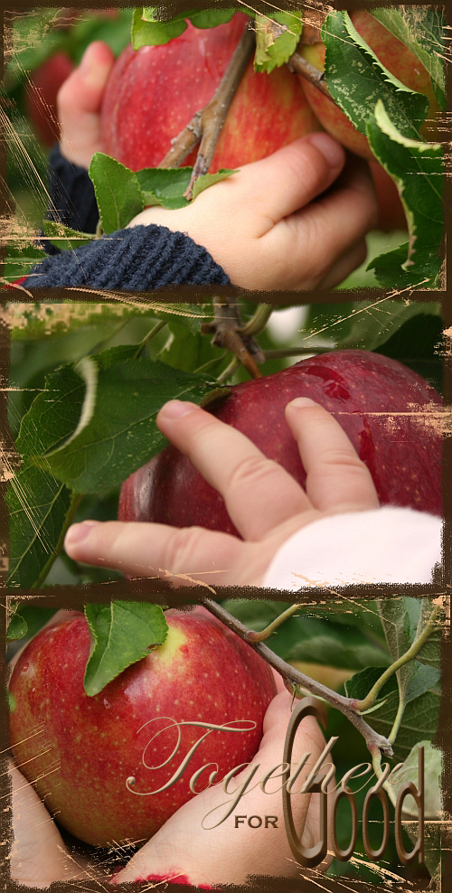 picking apples copy